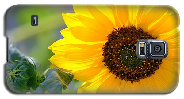 Galaxy S5 Case featuring the photograph Wild Sunflower by Nadalyn Larsen