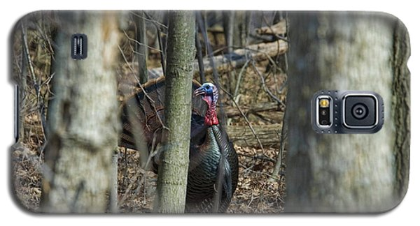 Wild Turkey 1 Galaxy S5 Case