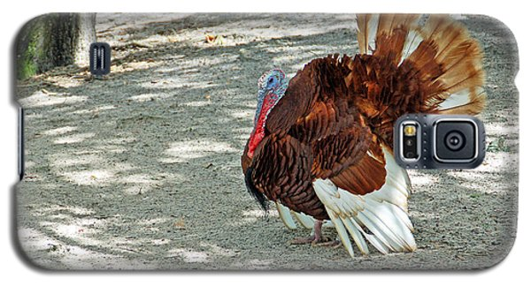 Wild Turkey Galaxy S5 Case by Aimee L Maher Photography and Art Visit ALMGallerydotcom