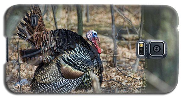 Wild Turkey Galaxy S5 Case