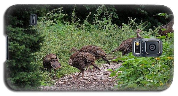 Wild Turkey Family Galaxy S5 Case by Teresa Schomig