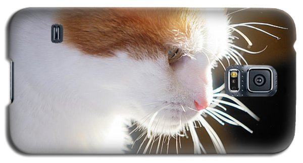 Wild Whiskers Galaxy S5 Case