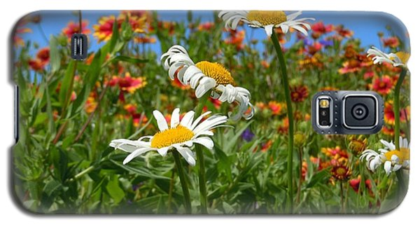 Galaxy S5 Case featuring the photograph Wild White Daisies #1 by Robert ONeil