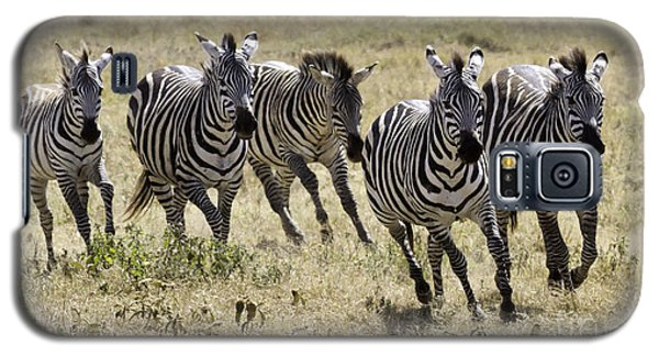 Galaxy S5 Case featuring the photograph Wild Zebras Running  by Chris Scroggins