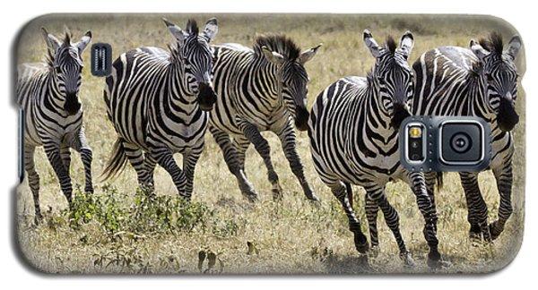 Wild Zebras Running  Galaxy S5 Case