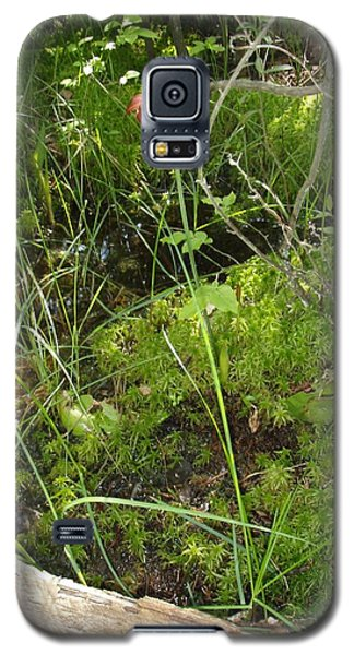 Galaxy S5 Case featuring the photograph Wildflower 1 by Robert Nickologianis