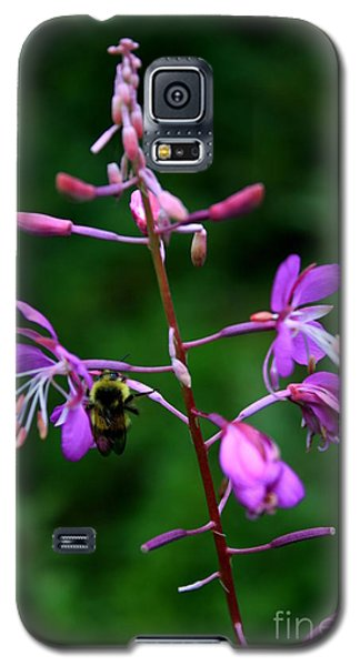 Galaxy S5 Case featuring the photograph Wildflower Bee by Amanda Holmes Tzafrir