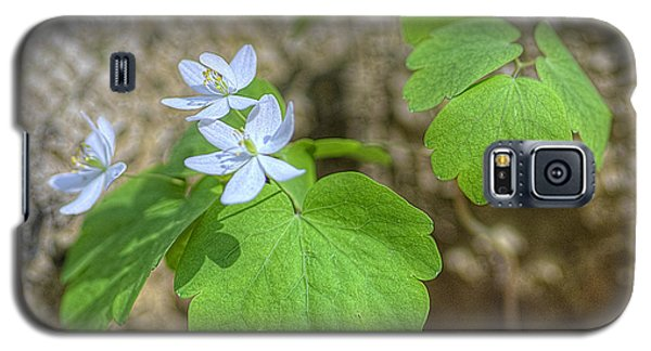 Wildflower In Woods Galaxy S5 Case by Wanda Krack