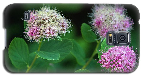 Wildflowers Galaxy S5 Case by Bob Noble Photography