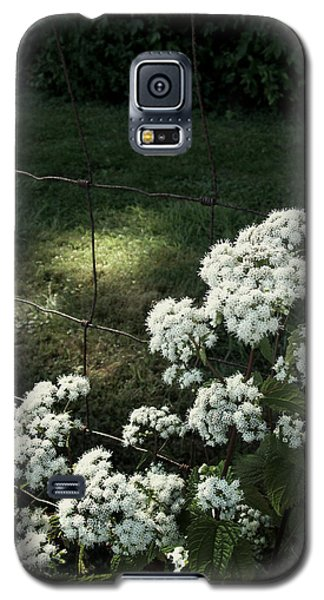 Galaxy S5 Case featuring the photograph Wildflowers by Cynthia Lassiter