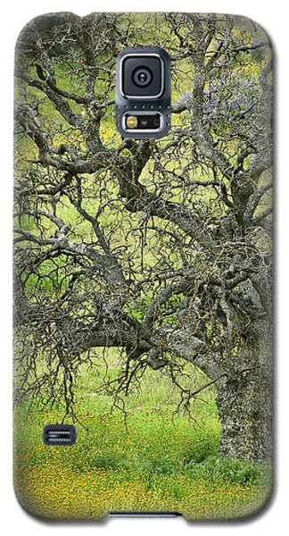 Wildflowers Under Oak Tree - Spring In Central California Galaxy S5 Case