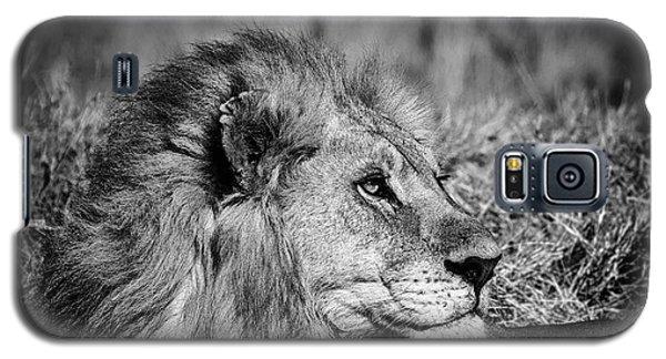 Wildlife Lion Galaxy S5 Case