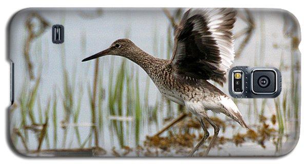 Willet Taking Flight Galaxy S5 Case