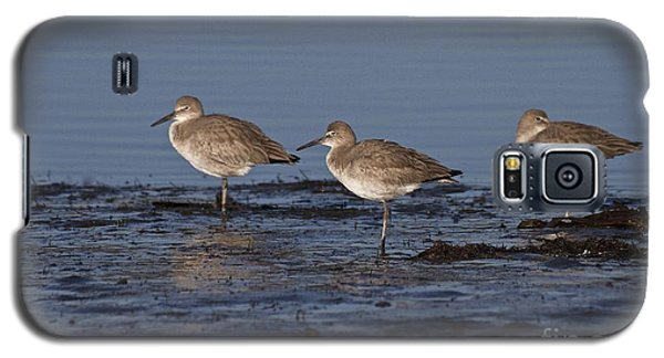 Galaxy S5 Case featuring the photograph Willet's In The River by Ruth Jolly