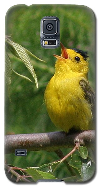 Wilson's Warbler Galaxy S5 Case by John Bushnell