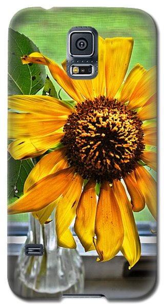 Wilting Sunflower In Window Galaxy S5 Case by Greg Jackson