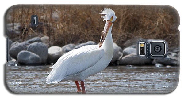 Windblown Pelican On A Rock Galaxy S5 Case