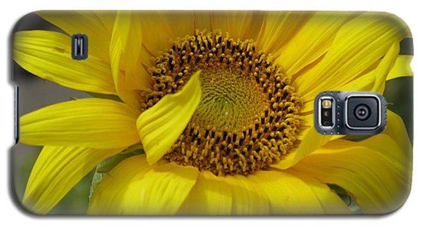 Windblown Sunflower Three Galaxy S5 Case by Barbara McDevitt