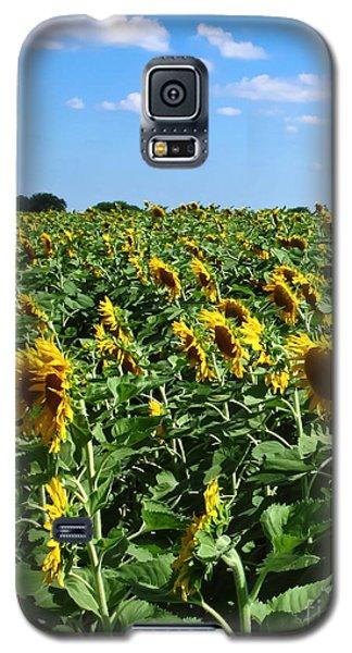 Windblown Sunflowers Galaxy S5 Case