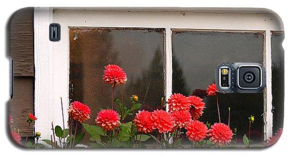 Galaxy S5 Case featuring the photograph Window Box Delight by Jordan Blackstone
