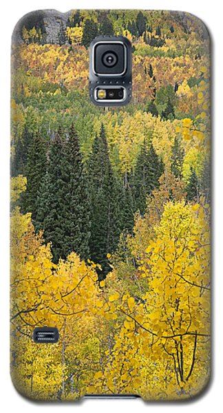 Window To Autumn Splendor Galaxy S5 Case by Morris  McClung
