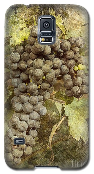 Winery Grapes Galaxy S5 Case