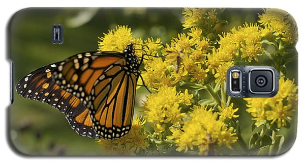 Wings - Monarch On Goldenrod Galaxy S5 Case