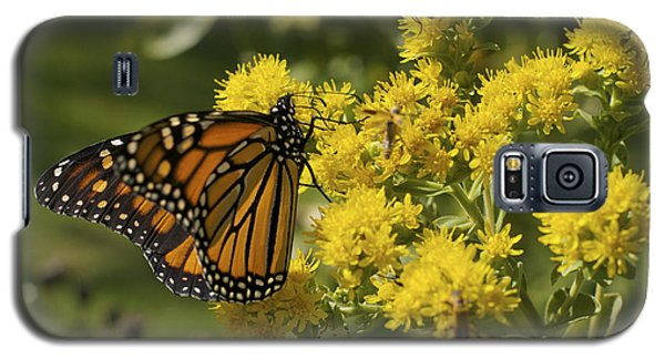 Wings - Monarch On Goldenrod Galaxy S5 Case by Jane Eleanor Nicholas