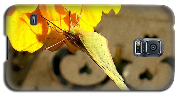 Galaxy S5 Case featuring the photograph Wings Together Proboscis Out by Heidi Manly