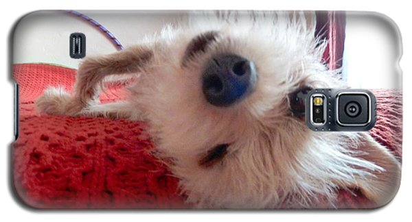 Galaxy S5 Case featuring the photograph Wink by Julia Ivanovna Willhite