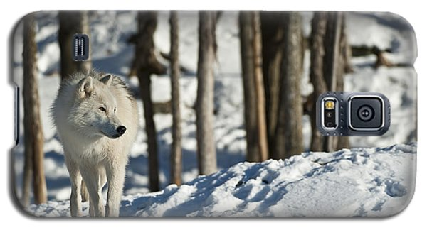 Galaxy S5 Case featuring the photograph Winter Arctic Wolf by Wolves Only