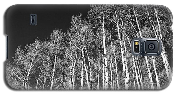Galaxy S5 Case featuring the photograph Winter Aspens by Roselynne Broussard