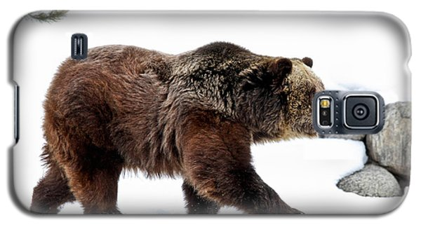Winter Bear Walk Galaxy S5 Case by Athena Mckinzie