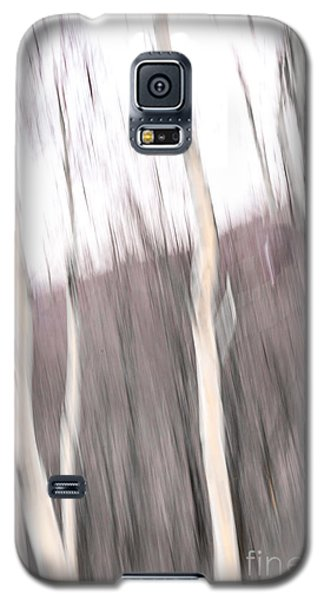 Winter Birches Tryptich 1 Galaxy S5 Case