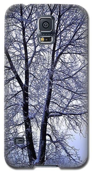 Winter Tree In Blue Fog Galaxy S5 Case