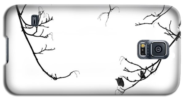 Winter Branch Abstract Galaxy S5 Case