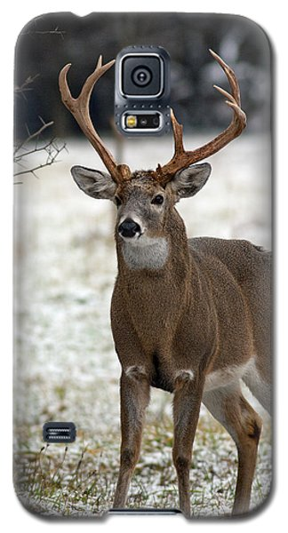 Galaxy S5 Case featuring the photograph Winter Buck by Timothy McIntyre