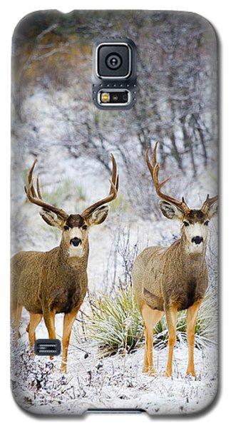 Winter Bucks Galaxy S5 Case