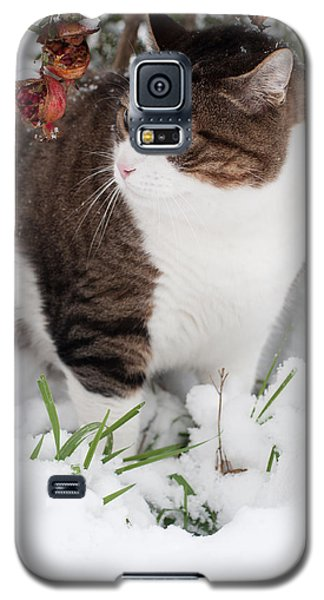 Galaxy S5 Case featuring the photograph Winter Cat by Laura Melis