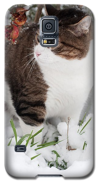 Winter Cat Galaxy S5 Case by Laura Melis