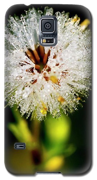 Galaxy S5 Case featuring the photograph Winter Dandelion by Pedro Cardona