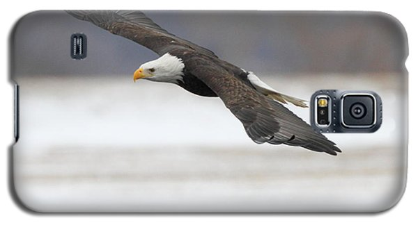 Winter Eagle Galaxy S5 Case