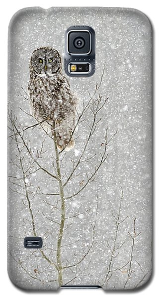 Winter Ghost Galaxy S5 Case