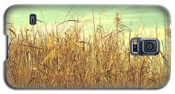Winter Grass Galaxy S5 Case by Rachel Mirror