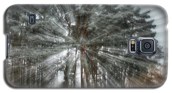 Winter Light In A Forest Galaxy S5 Case