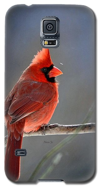 Winter Morning Cardinal Galaxy S5 Case by Nava Thompson