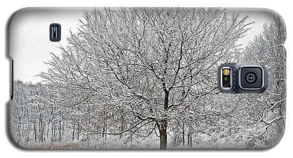Galaxy S5 Case featuring the photograph Winter Park by Aimee L Maher Photography and Art Visit ALMGallerydotcom