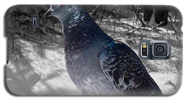 Galaxy S5 Case featuring the photograph Winter Pigeon by Nina Silver