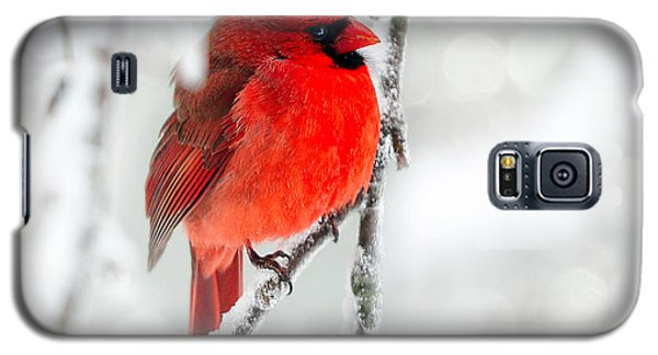 Galaxy S5 Case featuring the photograph Winter Red by Jaki Miller