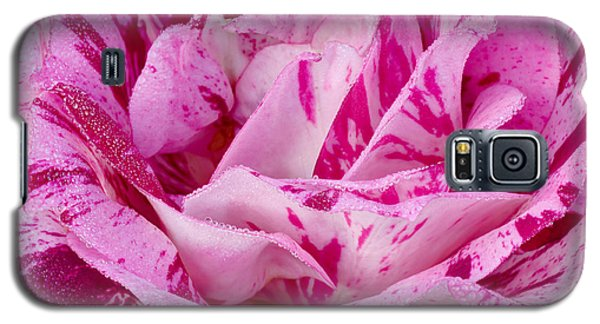 Galaxy S5 Case featuring the photograph Winter Rose  by Heidi Smith